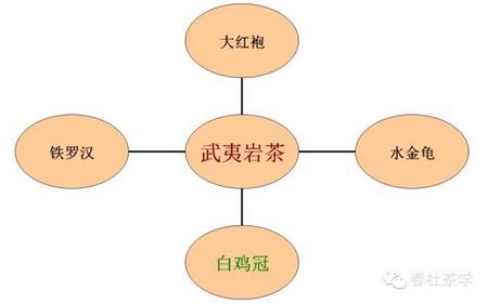 属武夷岩茶,是武夷四大名丛之一 |春社茶学茶艺师基础知识,茶艺师招聘