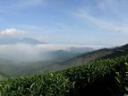 高山云雾出好茶,好茶都出自高山上?