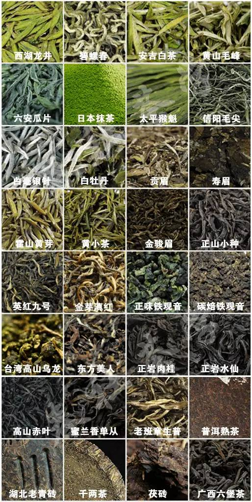 茶艺、评茶培训