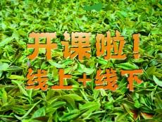 我们开工啦!!!新年新气象:春社茶学传统文化培训双轨教学模式正式启动