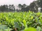 春社茶学2020年评茶员培训基础班10月开班通知